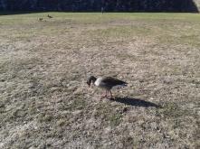 A bird :)
