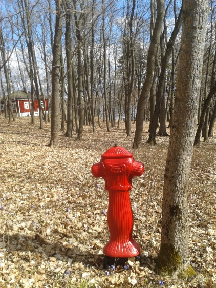 Fire hydrant in the middle of the forest