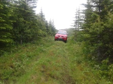 Pickup on the forest road