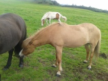 Horses #3