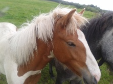 Horses #4