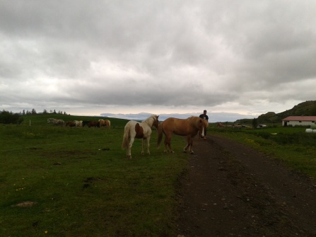 Horses blocking the road