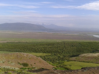 Proof that Iceland has forests :)